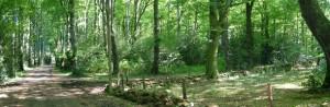 Rando ALERT-ES @ Forêt des Palanges | Montrozier | Languedoc-Roussillon Midi-Pyrénées | France